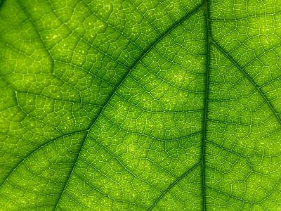 macro photography of leaf