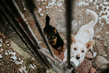 Dogs behind metal bars