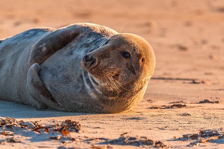 gray sea lion lying on sand
