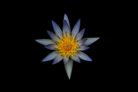 Grey and Yellow Petaled Flower
