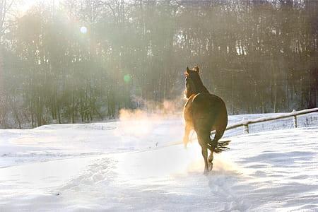 brown horse running on snowy ground