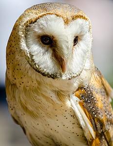 macro shot of white and yellow owl