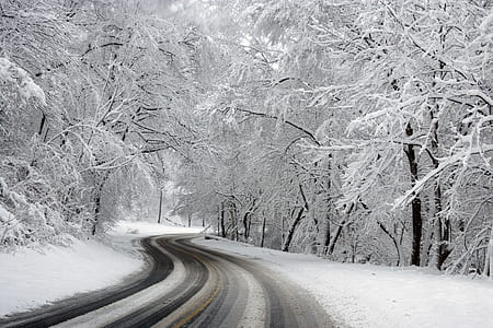 desired road in between trees