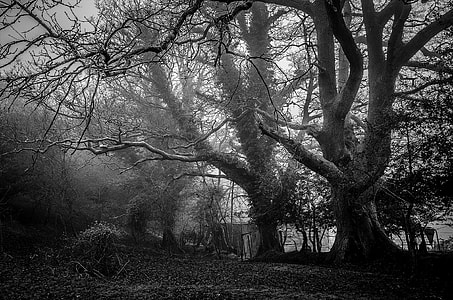 grayscale shot of trees