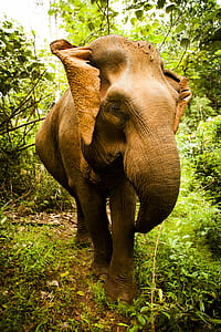Brown Elephant Stands Between Green Trees and Plants Under White Sky