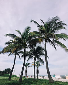 green coconut palm tree surrounded by grass during daytime