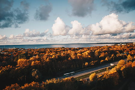 Aerial Photo of Car on the Road Surrounded by Brown Trees Under Alto Cumulus Clouds and Clear Blue Sky