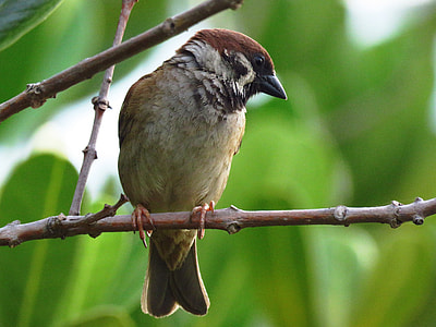 brown and gray bird on a tree