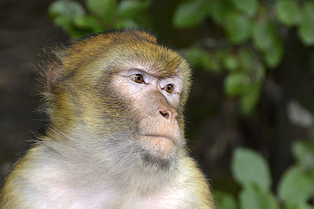 sun monkey photography during daytime