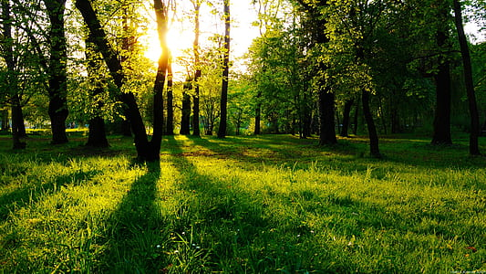green grass in forest during golden hour