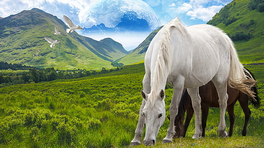 two white and brown horses eating grass graphic wallpaper