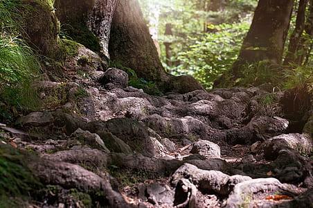landscape photo of treess
