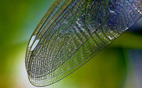 dragonfly wing in self-focus photography