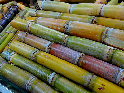 yellow and brown bamboo