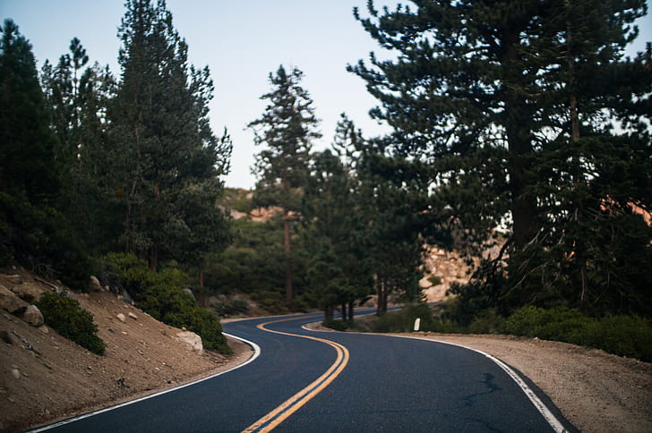 curvy asphalt road with trees on side of road