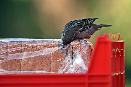 bird eating bread