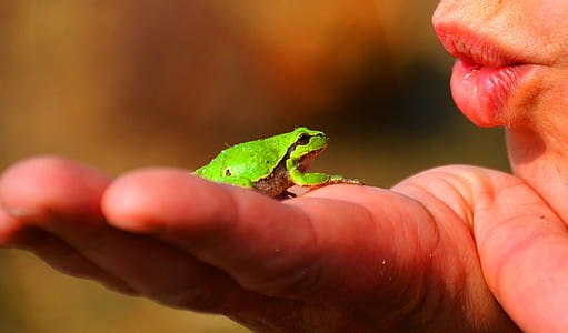 green frog on person's palm