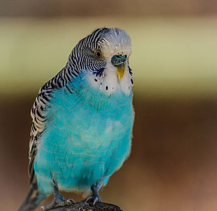 close-up photo of white and blue bird