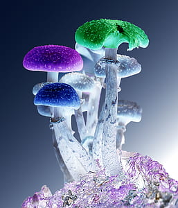 assorted-color mushroom