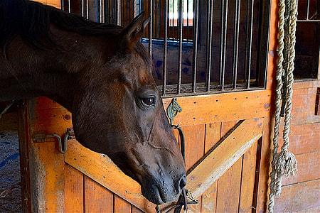 brown horse near brown wooden gate