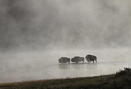 three animals walks on calm water