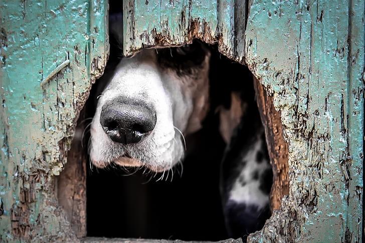 closeup photography short-coated black and white dog