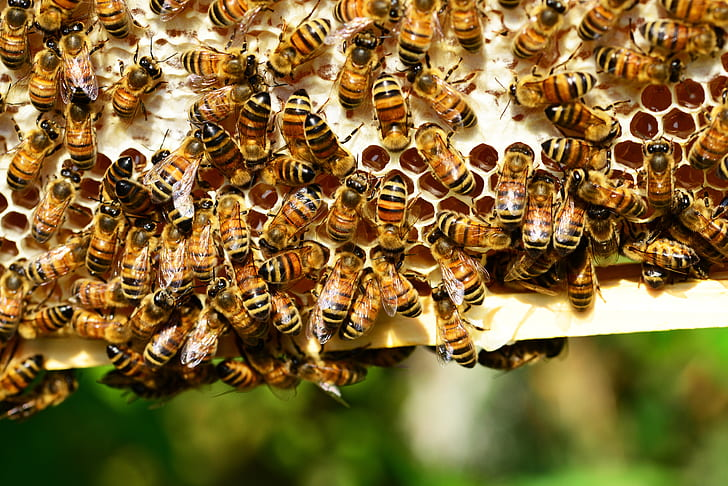close-up photo of bees on white surface