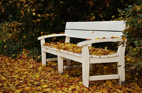 photo of white wooden bench white leaves