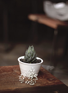 green-and-white cactus plant on top table