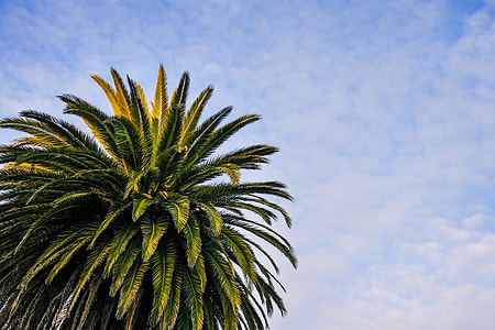 Beach Palm Tree with Cloudy Sky