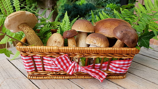 brown mushrooms in brown wicker basket