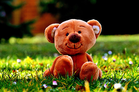 photography of brown bear plush toy on green grass