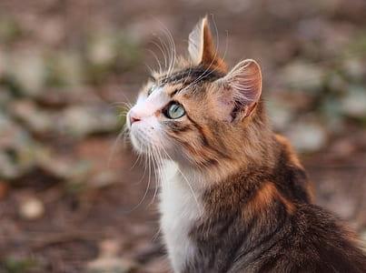 shallow focus of calico cat