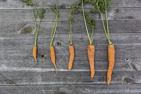 five carrots on top of gray wooden surface
