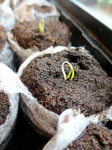 plant sapling