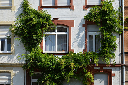 green plant arc collided on white apartment-type building