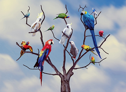 photo of birds on leafless tree