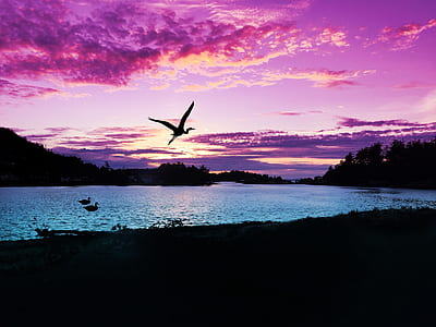 silhouette photography of bird near trees and body of water