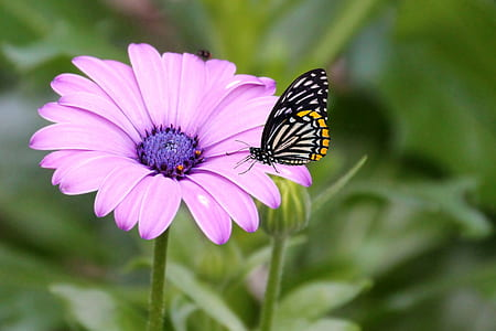 white and black butterfly on pink petaled flower