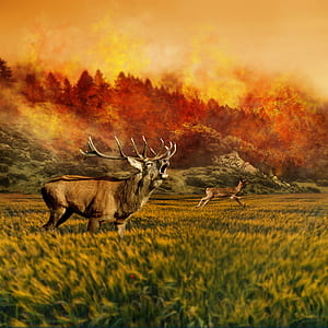 painting of moose and deer with wildfire background