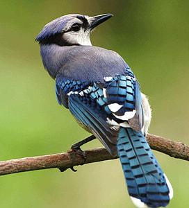 macro shot of blue and gray bird