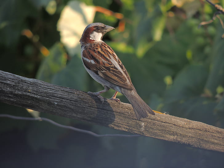 Brown and Gray Bird on Gray Wood