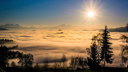 silhouette of trees with fog under golden hour