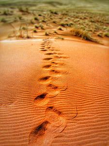 Foot Prints on Desert during Daytime