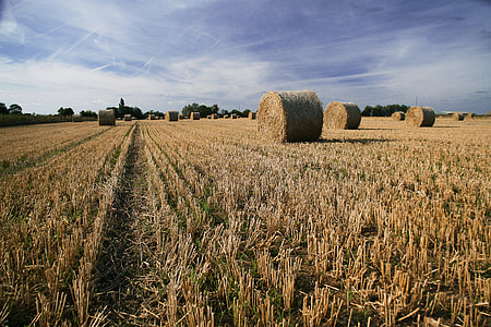 Landscape photo of hay bales in a farm field at harvest, image captured in Faversham, Kent, England