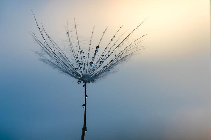 closeup photo of dandelion with dew