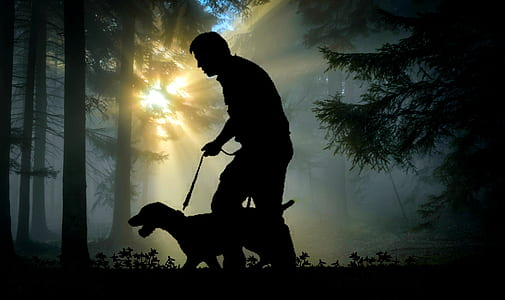 silhouette of a man holding a leash of dog in the woods with during golden hour