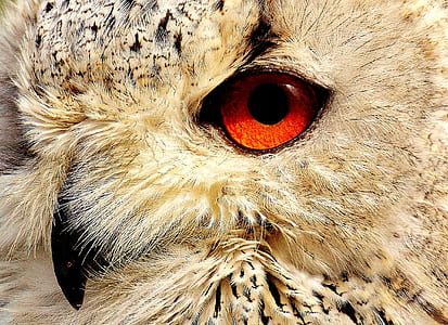 beige and gray owl