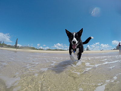 black and white border collie puppy walking on seashore during daytime