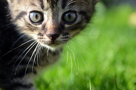 shallow photography of a brown Tabby kitten
